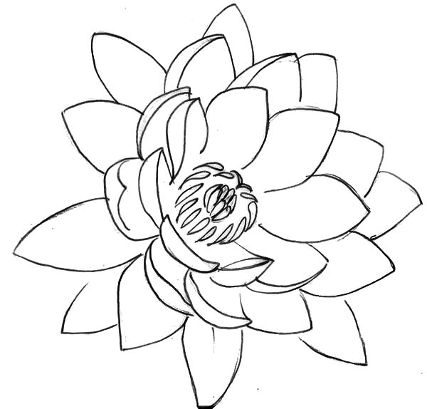 Line drawing lotus flower at getdrawings free for personal use 600x574 drawing lotus flower coloring pages batch coloring mightylinksfo