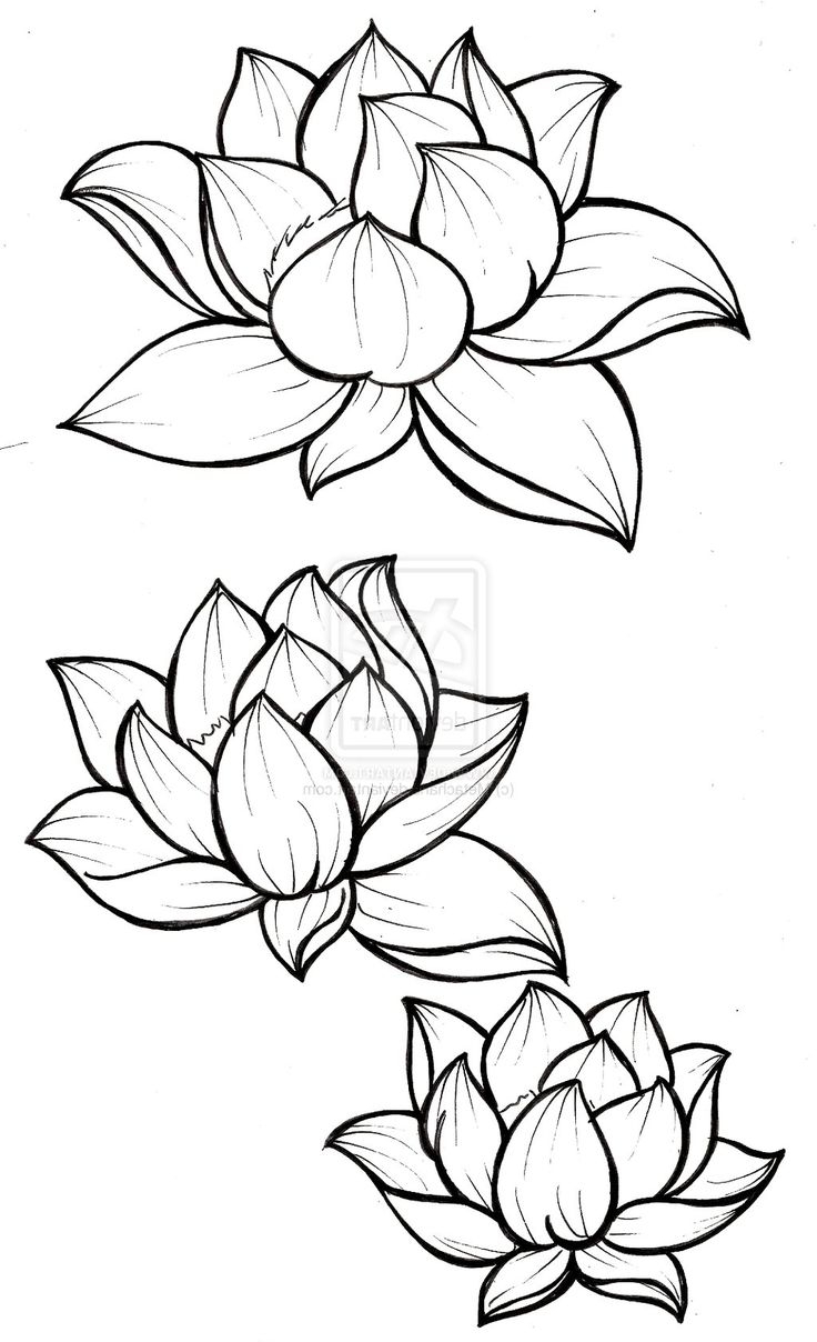 Line Drawing Flower Images : Line drawing lotus flower at getdrawings free for