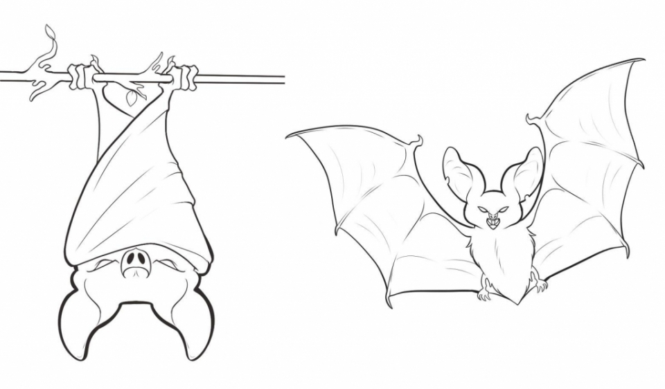 Line Drawing Of A Bat