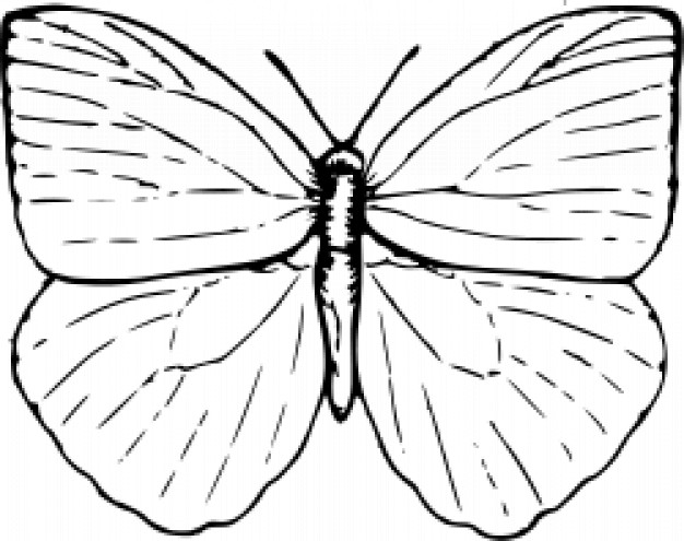 626x495 Butterfly Outline Vectors, Photos And Psd Files Free Download