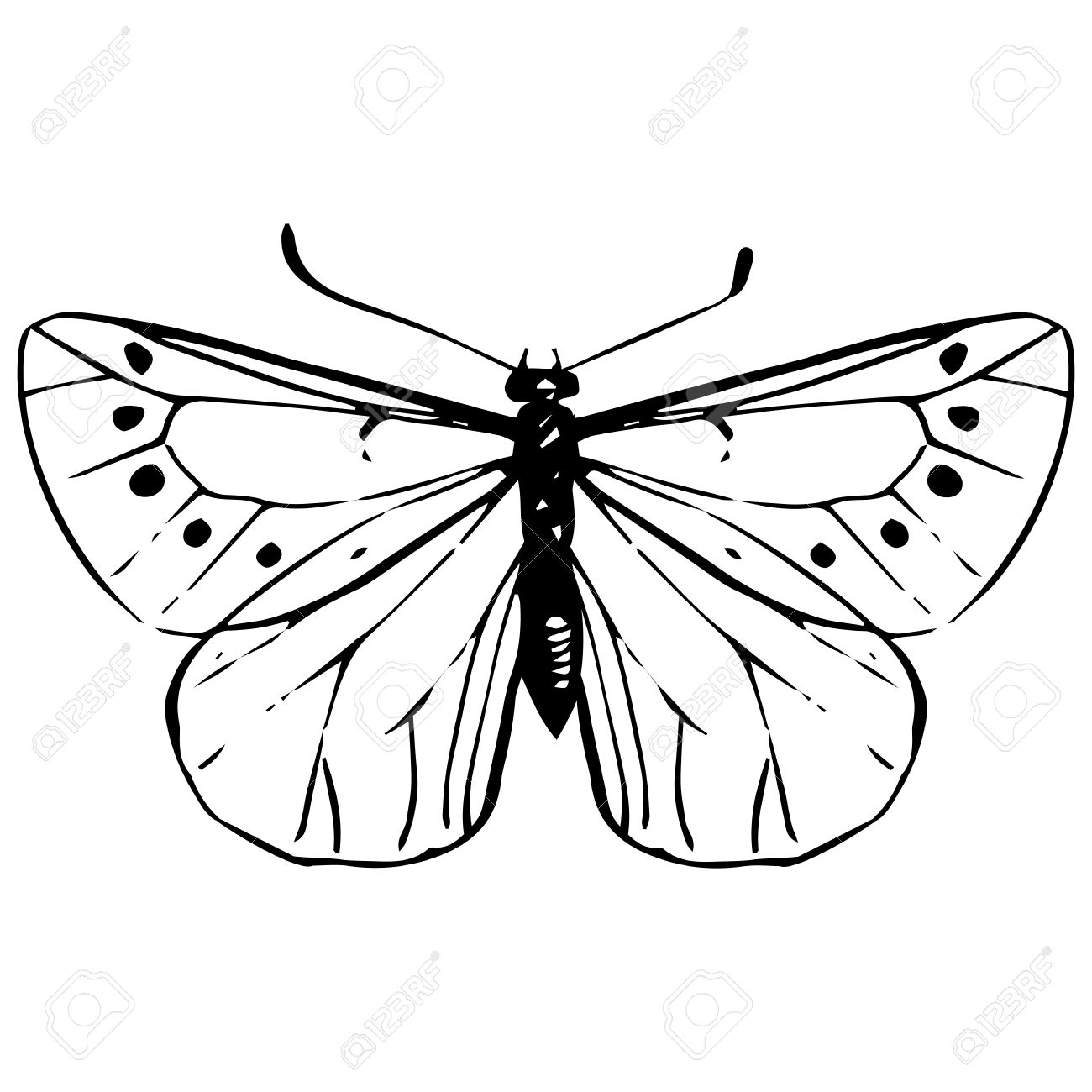 1300x1300 Cabbage Moth, Hand Drawn Butterfly, Black Veined White , Line