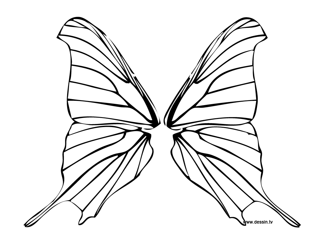 1024x768 Coloring Butterfly Wings