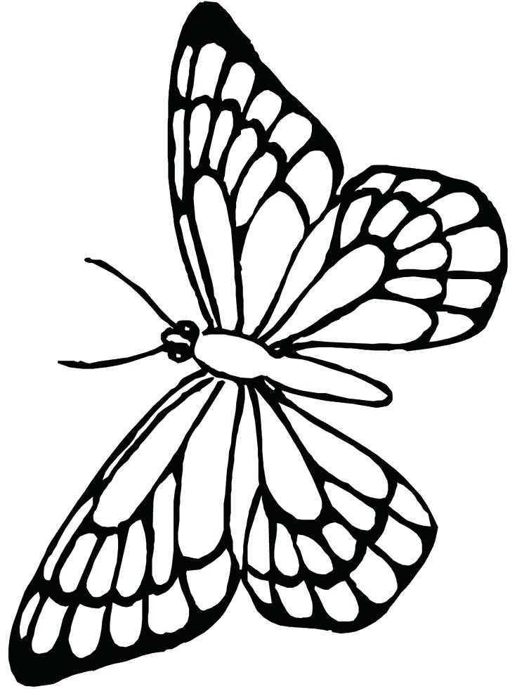 736x980 Cute Butterfly Coloring Pages Cute Butterfly Line Drawing Coloring