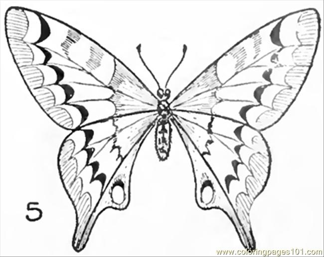650x516 Drawing Butterflies Finished Coloring Page