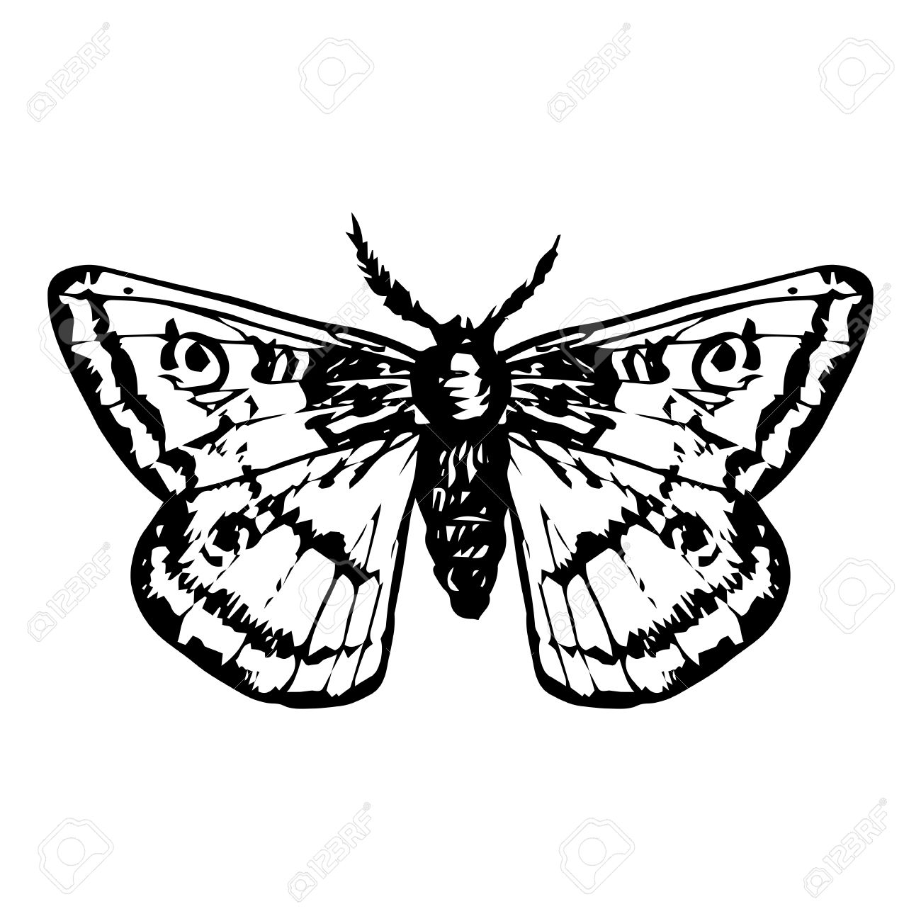 1300x1300 Hand Drawn Butterfly, Night Moth, Peacock Butterfly,line Drawing