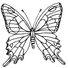 230x230 Top 50 Free Printable Butterfly Coloring Pages Online