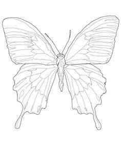 236x314 Linert Drawings Butterflies Blackmp White Line Drawing