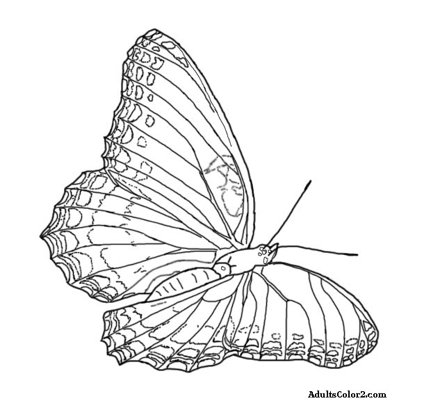 620x590 Butterfly Coloring Pages Airborne Art