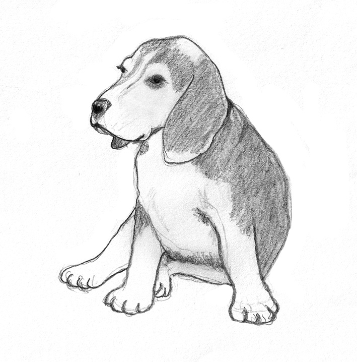 709x718 Dog Sketches