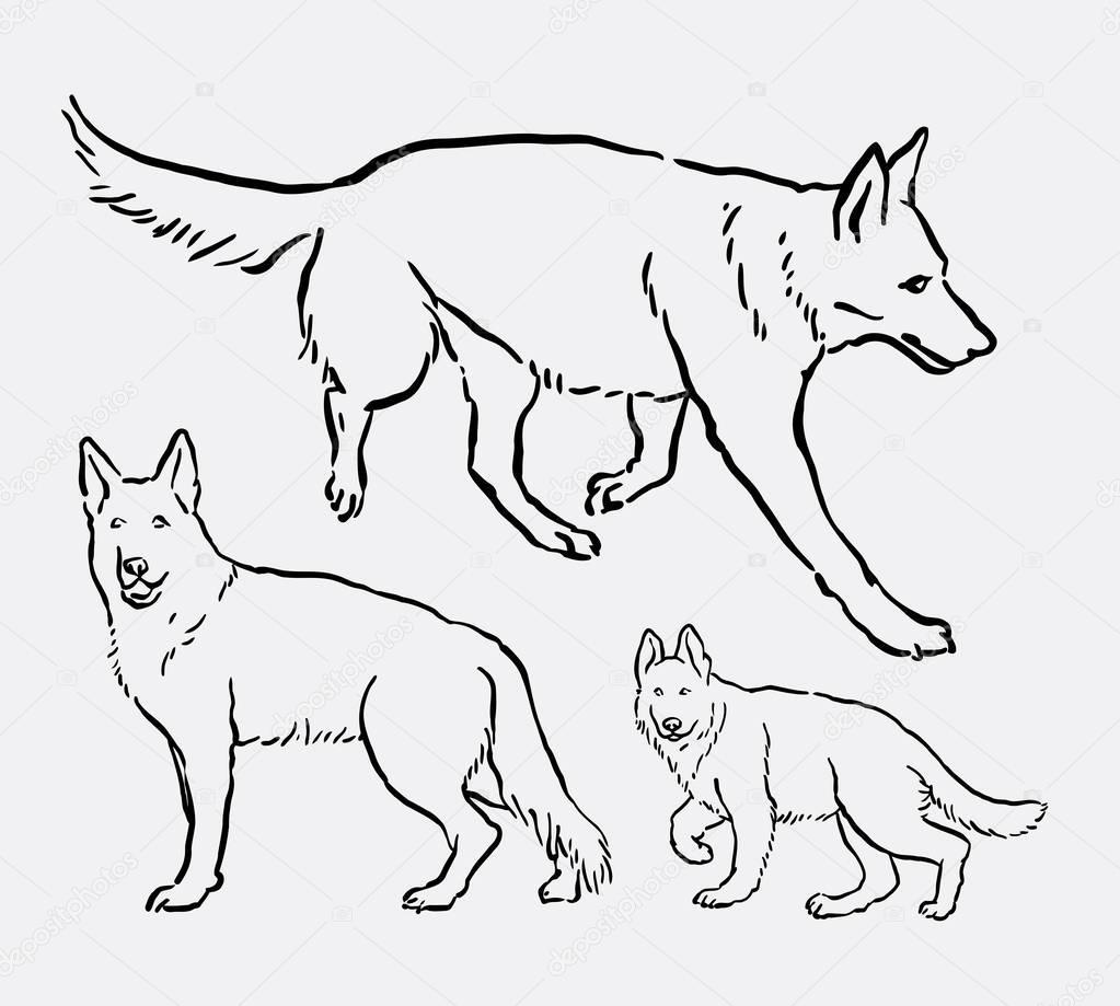 1023x919 German Shepherd Pet Dog Mammal Animal Line Art Drawing Stock