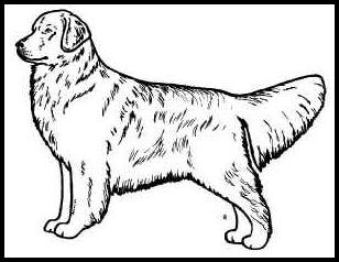 308x238 Specific Dog Breed Line Art Graphics And Drawings