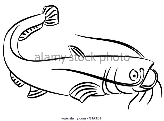 640x473 Line Drawing Catfish On White Stock Photos Amp Line Drawing Catfish