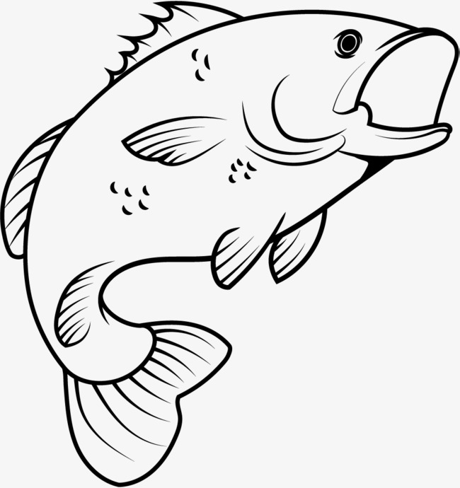 650x690 Line Fish, The Fish Out The Water, Jumping Fish, Jump Out