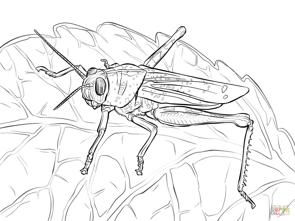 1199x899 Egyptian Grasshopper Coloring Page Free Printable Coloring Pages