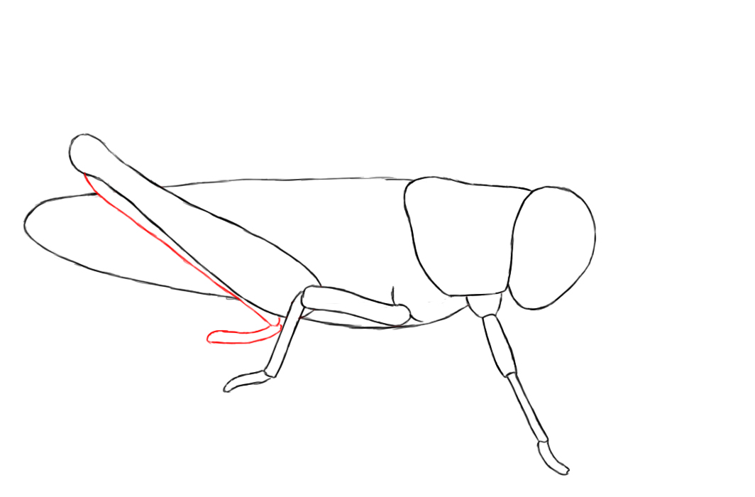 1064x700 how to draw a grasshopper