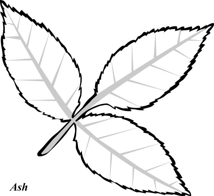 747x686 best photos of leaf drawing template