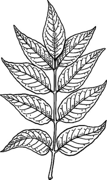 358x600 Biology Leaf Structure