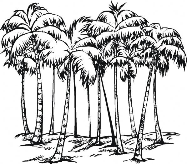 598x525 Pix For Gt Coconut Palm Drawing Hawaiian Illustrative Art