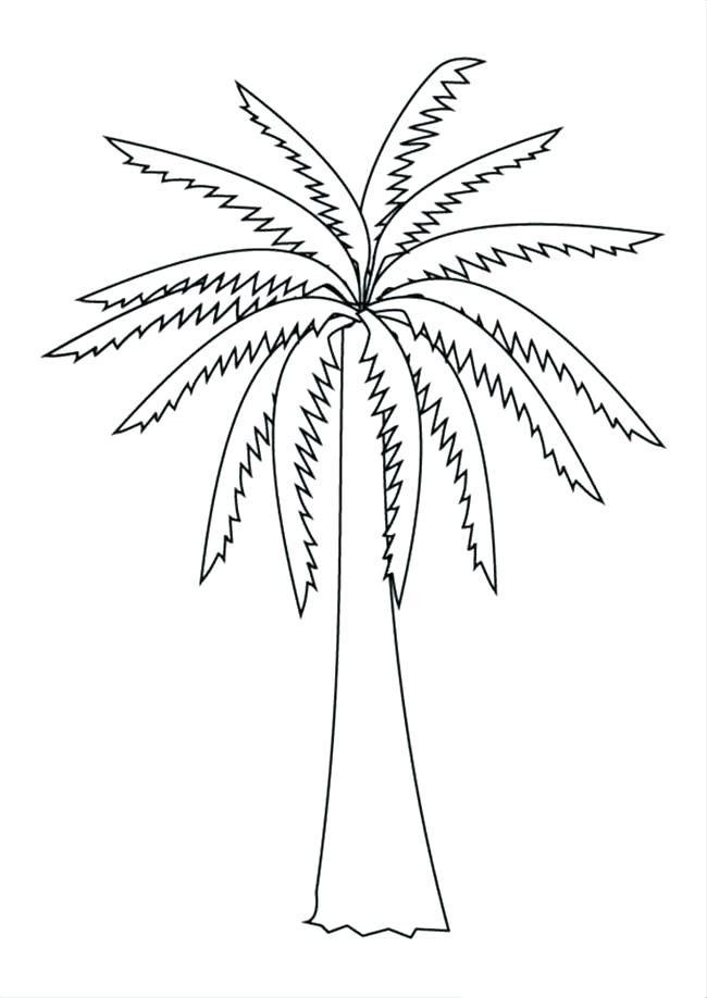 650x918 Palm Tree Coloring Pages Cortefocal.site