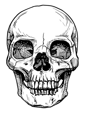 Line Drawing Of A Skull