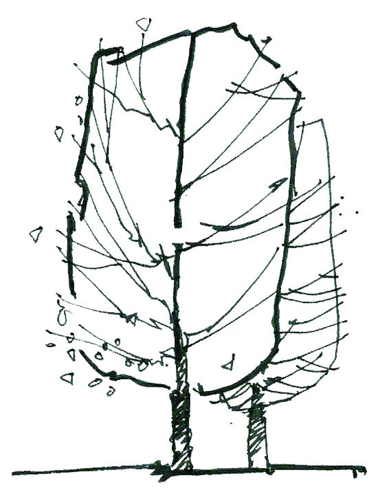550x729 Archilibs Blog A Quick Note On How To Sketch Trees In Elevation