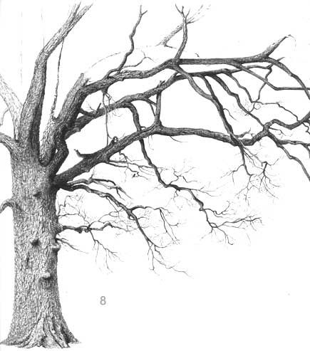 435x493 Tree Drawing. This Makes Me Want To Break Out The Old Sketchbook