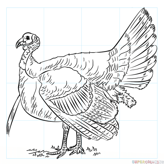 574x575 How To Draw A Turkey Step By Step Drawing Tutorials