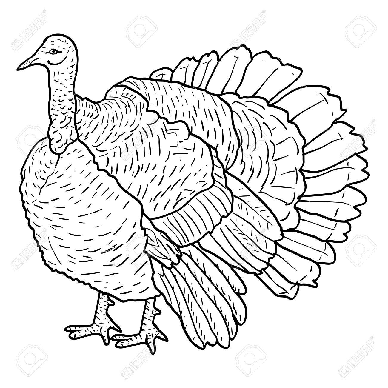 1300x1300 Sketch Black Turkey On A White Background. Vector Illustration