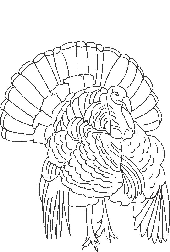 711x1052 The King Of Wild Turkey Coloring Pages Turkeys