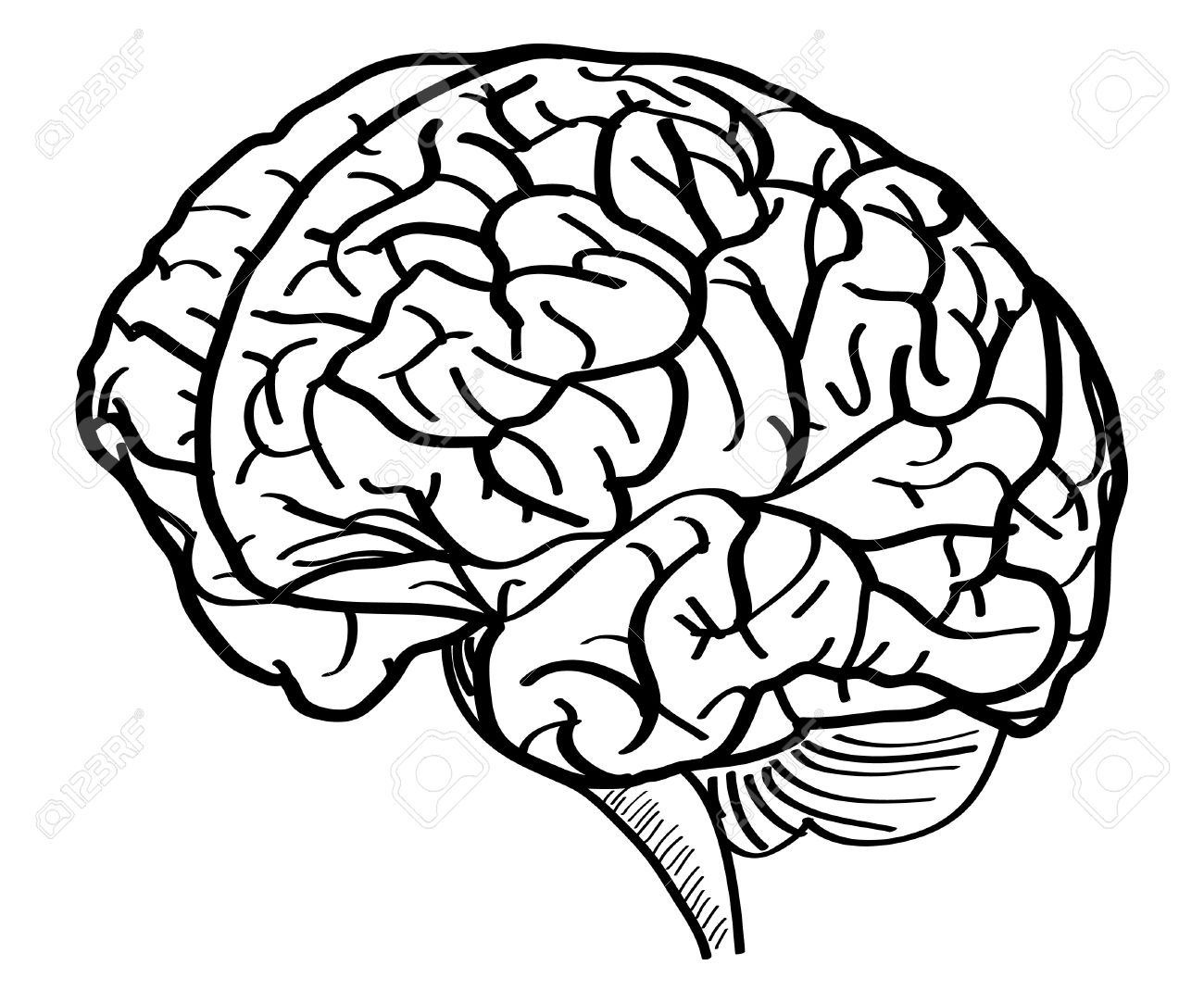 Line Drawing Of Brain at GetDrawings.com | Free for ...