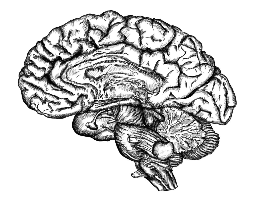 1024x813 New Theory Of The Brain Overturns Past Dogma Big Think
