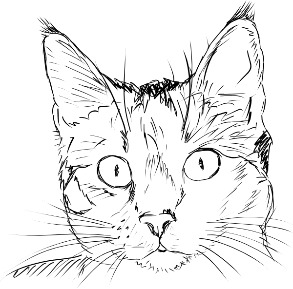 600x593 Best Photos Of Cat Face Outline