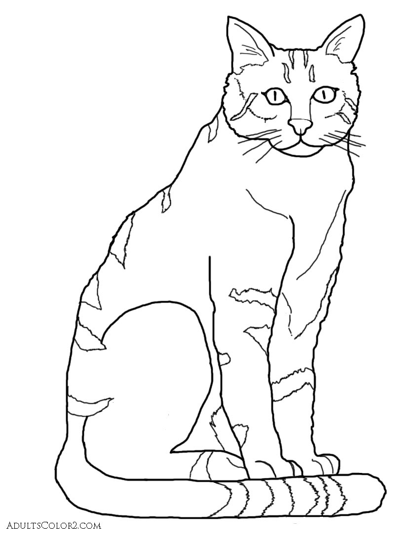 851x1100 Cat Coloring Pages Pint Sized Pumas On Parade