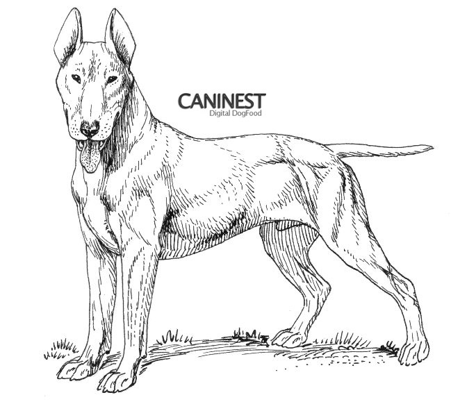 685x592 Dog Breed Coloring Pages