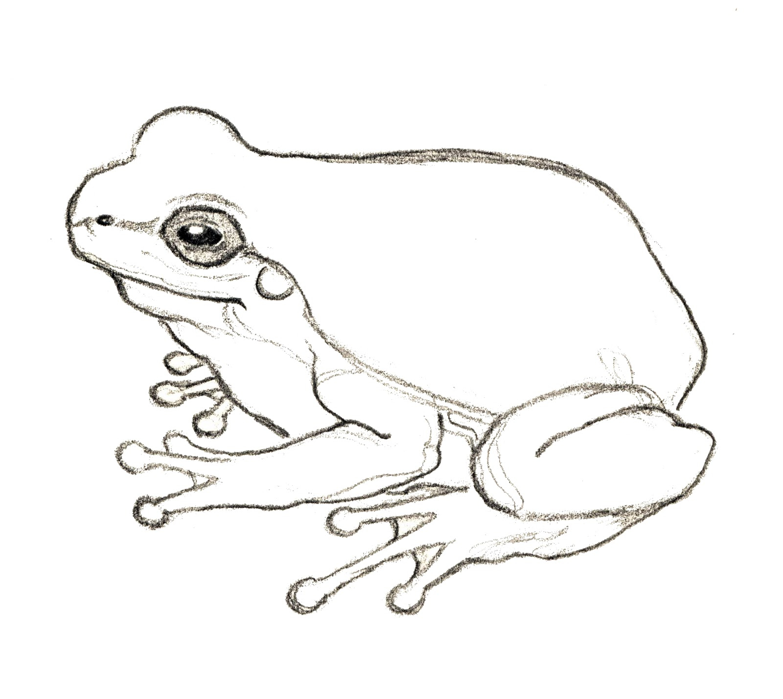 Line Drawing Of Frogs at GetDrawings | Free download