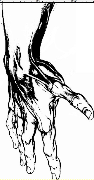 322x614 Completed Line Drawing Of Hand By Mrpandaam