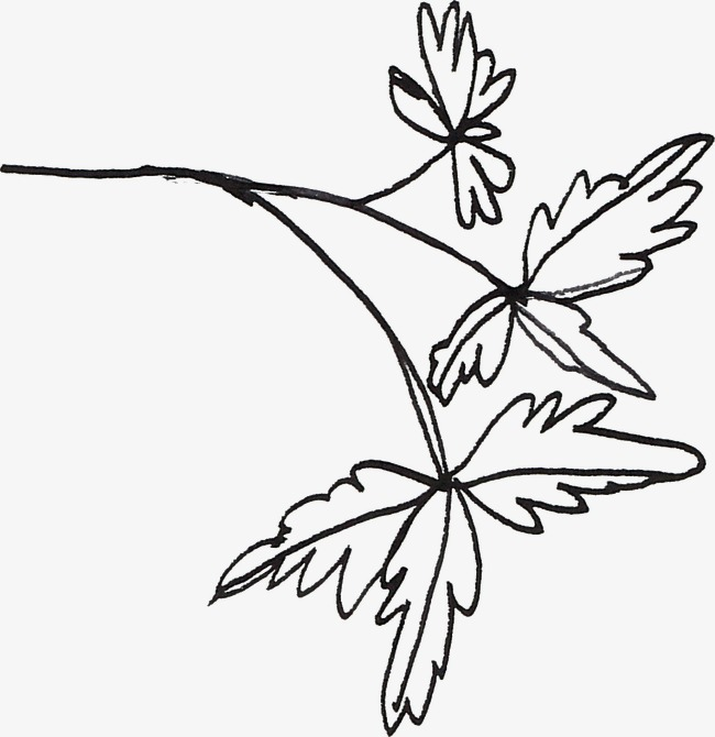 650x670 Line Drawing Leaves, Black, Line, Line Drawing Of Plant Png Image