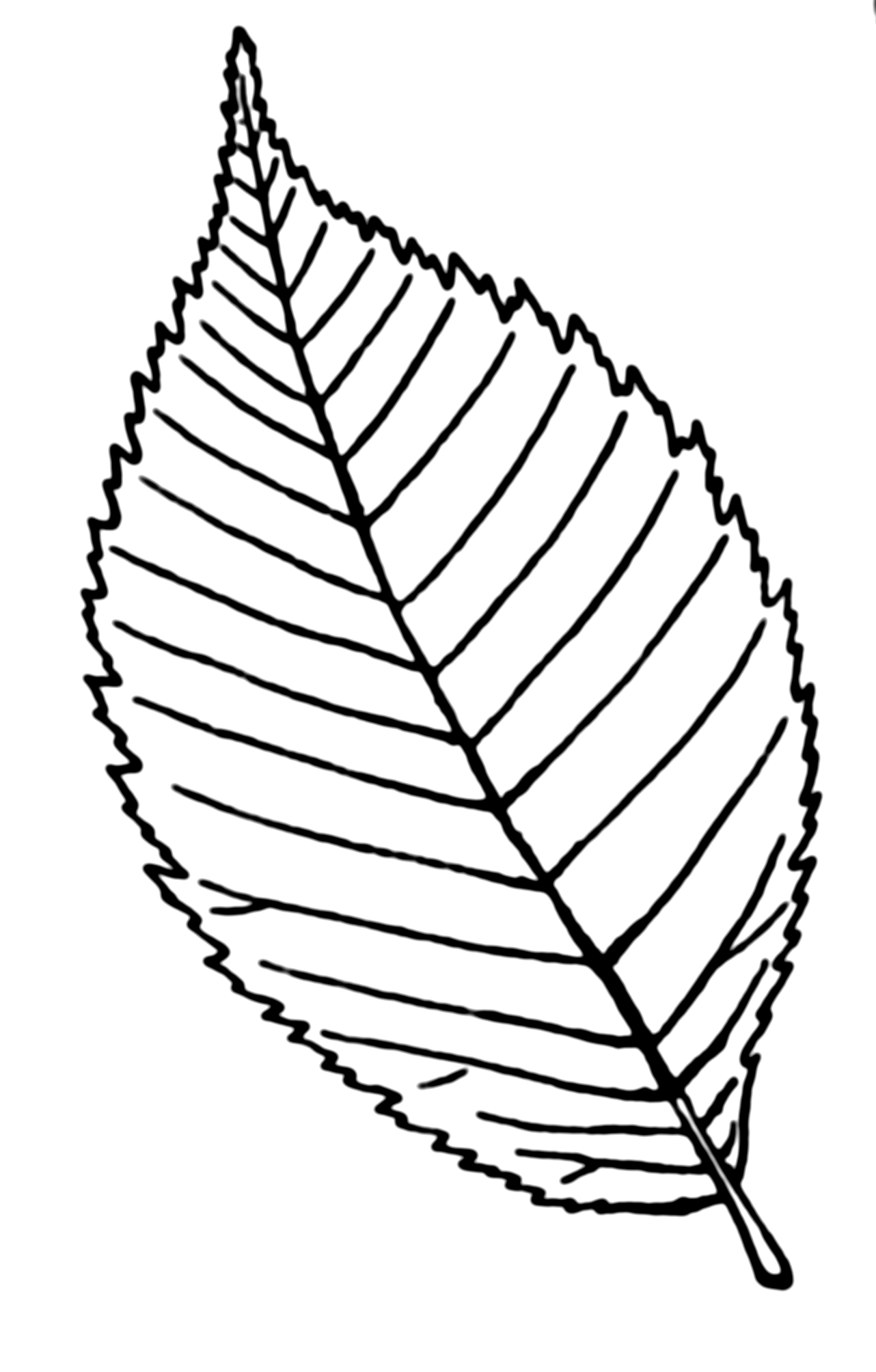 Contour Line Drawing Leaf : Line drawing of leaves at getdrawings free for