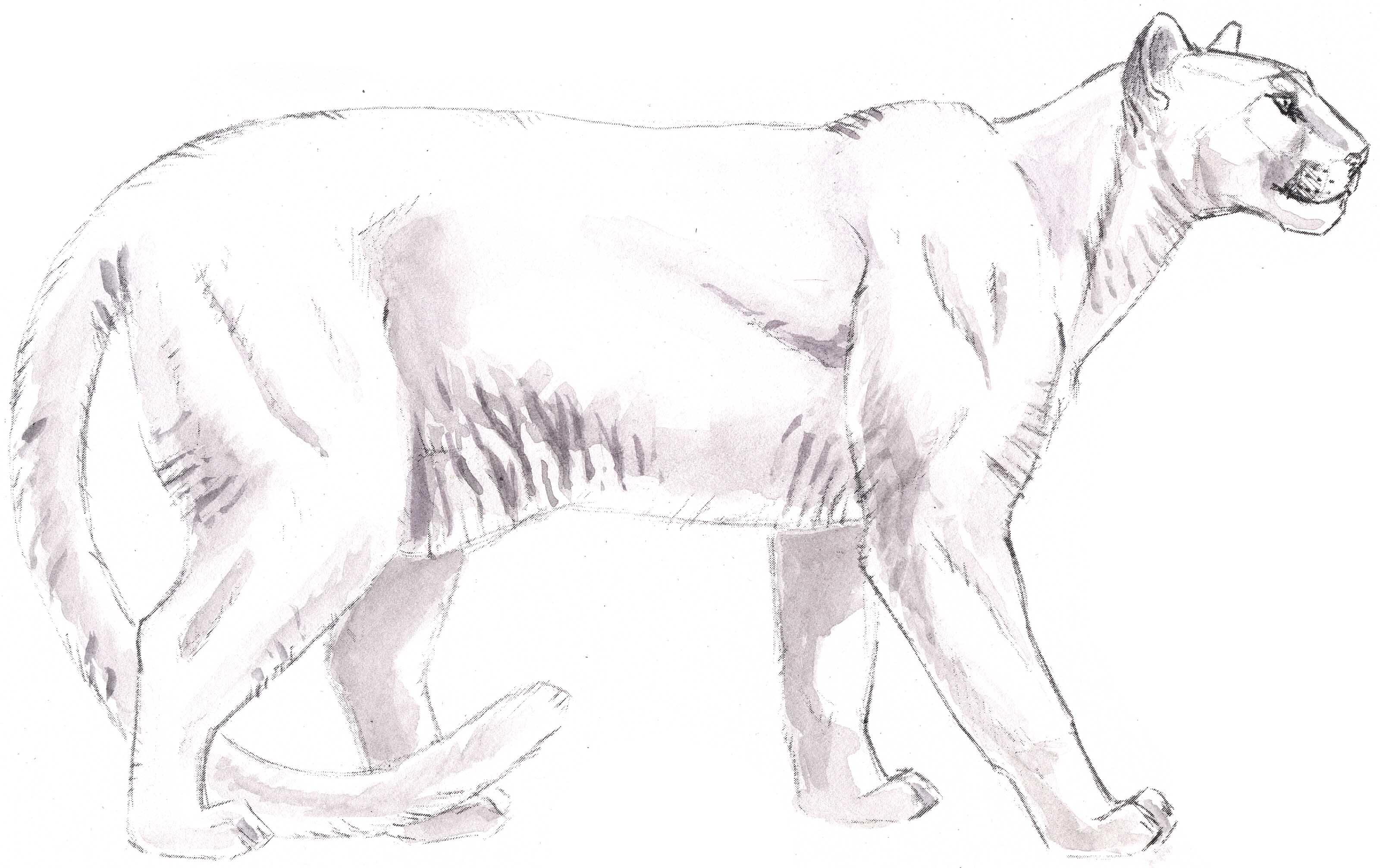3200x2014 Mountain Lion Skeleton 18