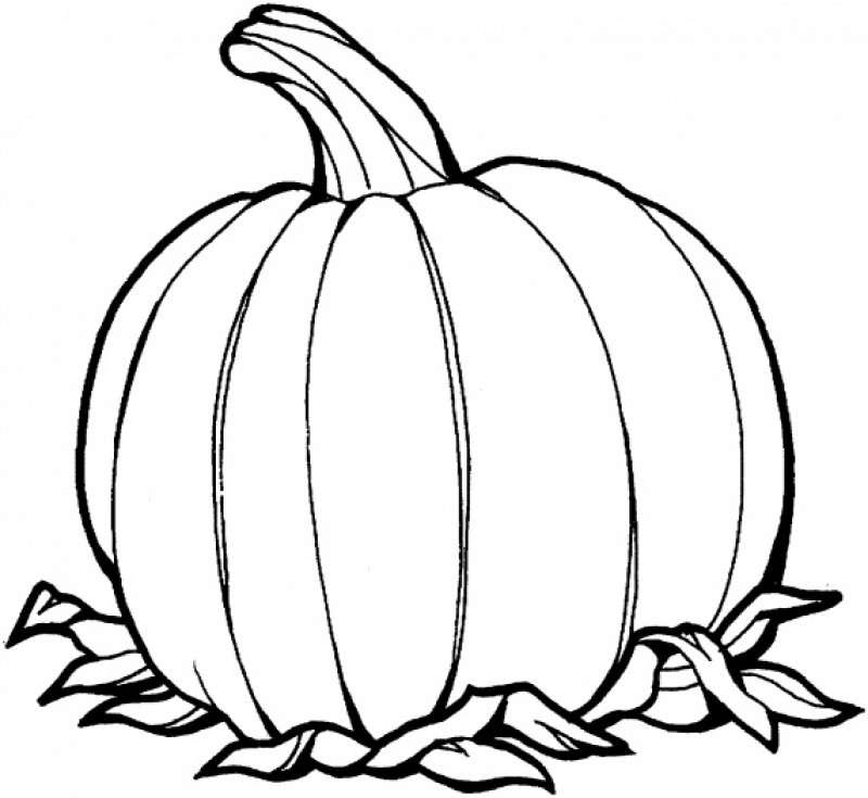Line drawing of pumpkin at free for for Blank pumpkin coloring page