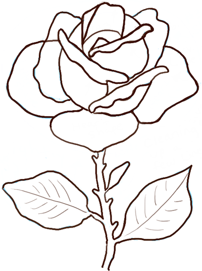 400x536 drawing rose