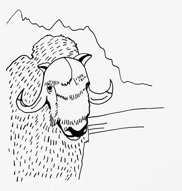 590x620 Sketch Sheep, Sketch, Sheep, Line Drawings Png Image For Free Download