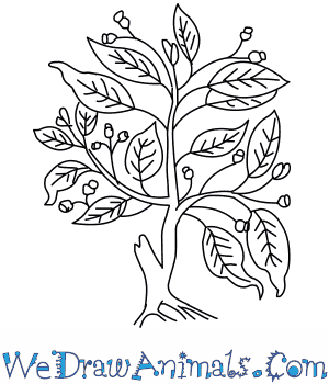 300x350 How To Draw A Fig Tree