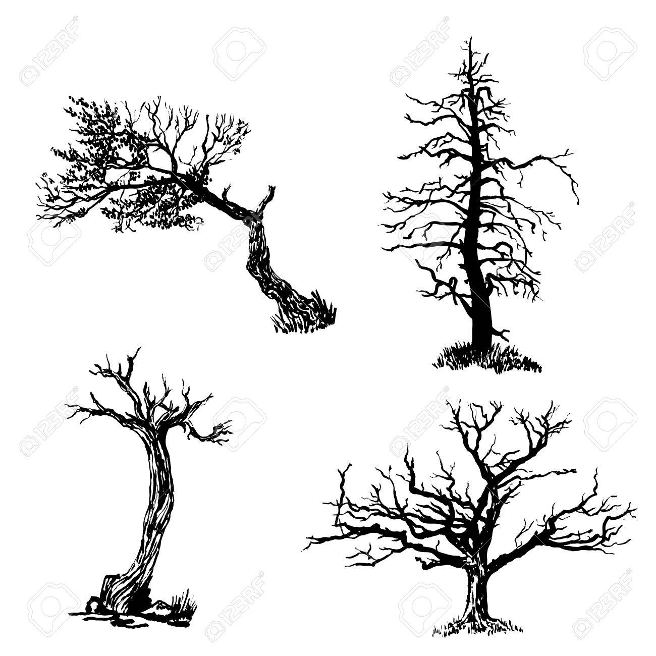 1300x1300 Drawing Set Of Four Trees Sketch Illustration Royalty Free