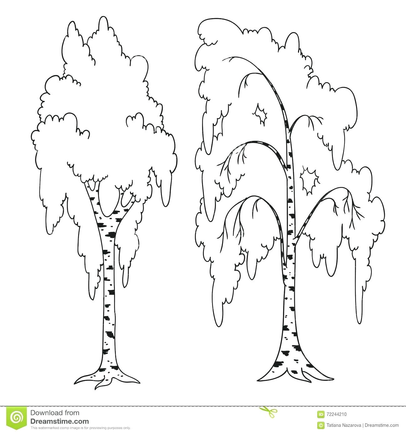 1300x1390 Mango Tree In Black And White Outline Of Trees Without Leaves Pine
