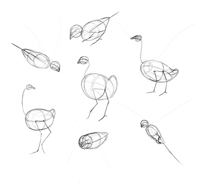 700x614 How To Draw Birds Step By Step Instructions