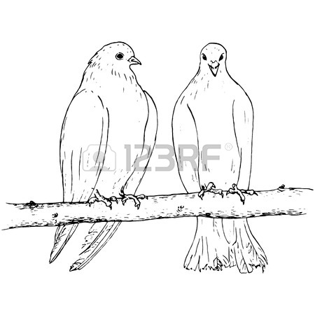450x450 Pair Of Pigeons Sitting On The Branch, Two Doves At Tree, Ink