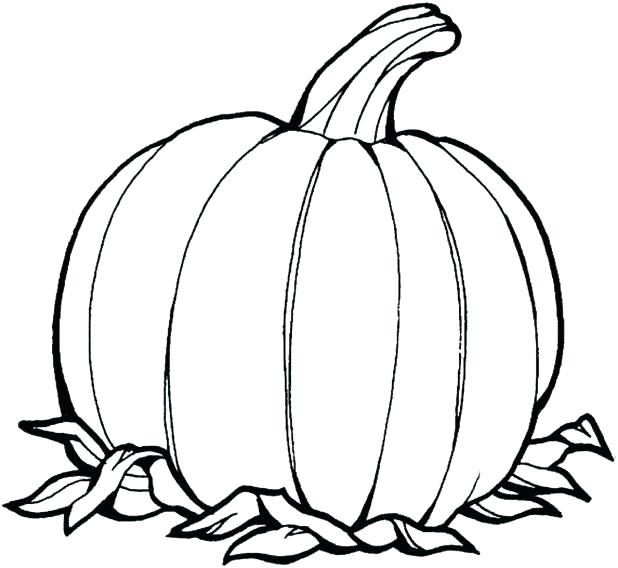 618x568 Pumpkin Coloring Book As Well As Printable Pumpkin Coloring Pages
