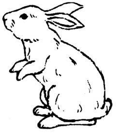 250x274 Rabbit Drawing Outline