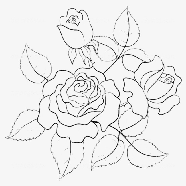 650x651 Hand Painted Roses Line Drawing, Rose Line Drawing, Hand Painted